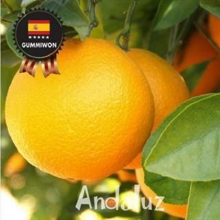 [무료배송] 네이블 오렌지 중과 10-14개 2.7kg 200g내외