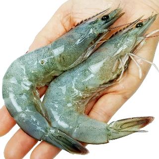 [티몬균일가] 국내산 흰다리새우 대 1kg 30~35미